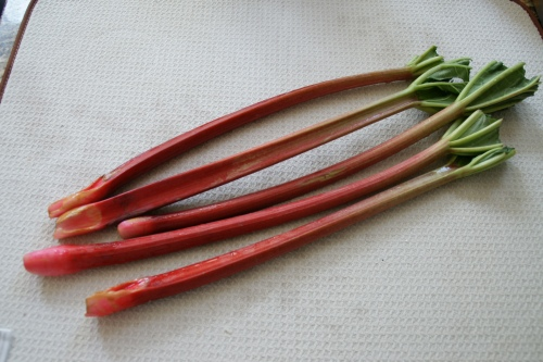 Beautiful red rhubarb-- discard the leaves!  They're poisonous.